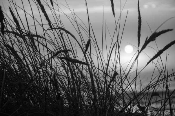 beach_grass_black_and_white_by_sheepranch-d6ugwfl